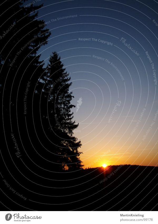 Es wird kalt... Sonnenuntergang gelb Sonnenaufgang Stimmung Verlauf Farbverlauf schön Romantik Wald Baum Himmel blau Zwischenlichten