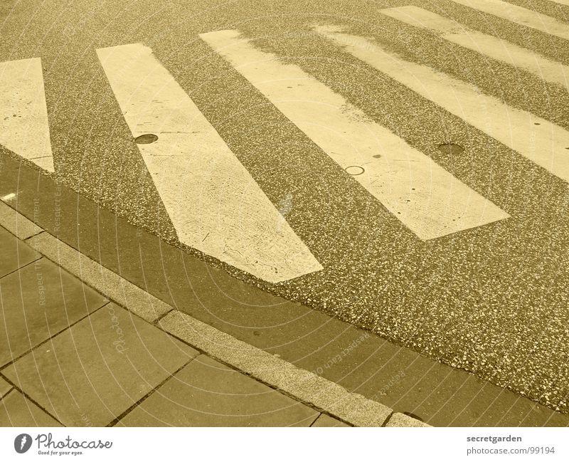 zebra Zebrastreifen Bordsteinkante weiß Streifen Asphalt Menschenleer Raum Überqueren Fußgänger gehen Bürgersteig Symbole & Metaphern Verkehrswege Warnhinweis