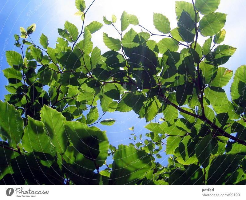 Im Garten Eden Himmel blau grün Sommer Baum Sonne Frühling Wetter Ast Baumstamm Gott Götter Mount Eden