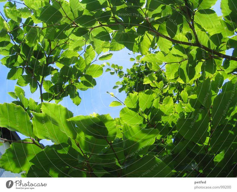 Im Garten Eden II Himmel blau grün Sommer Baum Frühling Sand Wetter Erde Ast Baumstamm Gott Götter Neuseeland Mount Eden