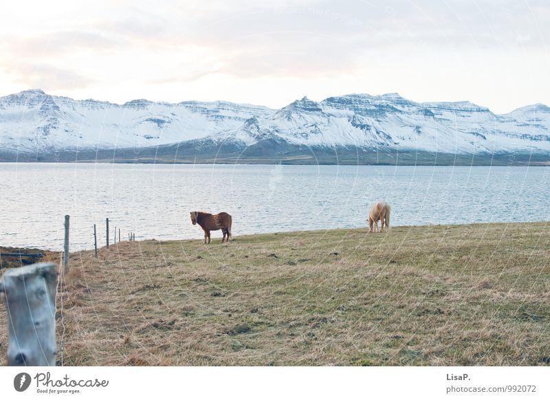 Natur blau Wasser grün Landschaft weiß Tier ruhig Winter Berge u. Gebirge Küste Schnee außergewöhnlich Feld Insel Coolness