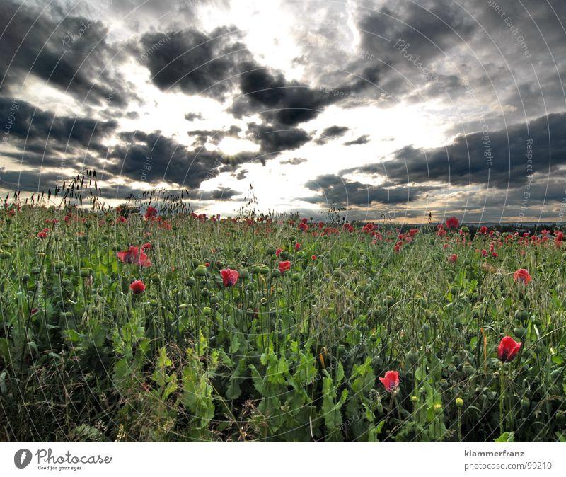 Mohntag Himmel grün blau rot ruhig schwarz Wolken Ernährung Einsamkeit Ferne Leben Erholung Gras Landschaft Feld Hintergrundbild