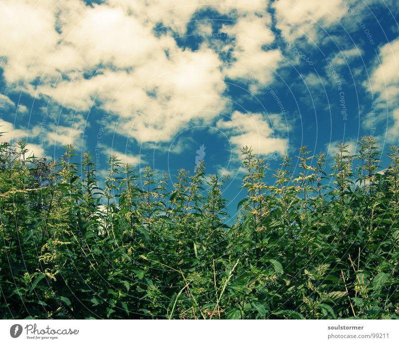 burn, burn, burn... Brennnessel brennen Pflanze grün weiß Cross Processing Stengel Blume Feld Wegrand Spielen Natur Himmel wehtun Schmerz blau crossfarben