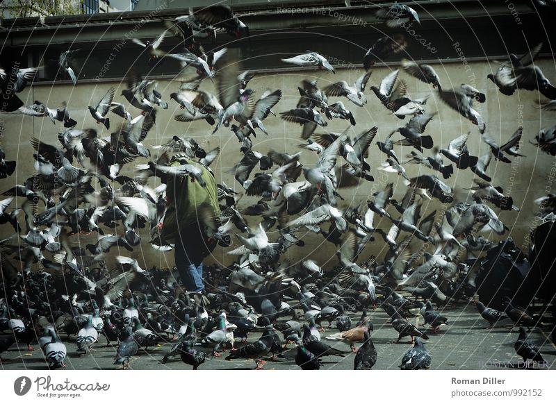 Taubenmann Mensch maskulin Männlicher Senior Mann 1 60 und älter Paris Frankreich Hauptstadt Stadtzentrum Tier Vogel Tiergruppe Schwarm fliegen füttern gehen
