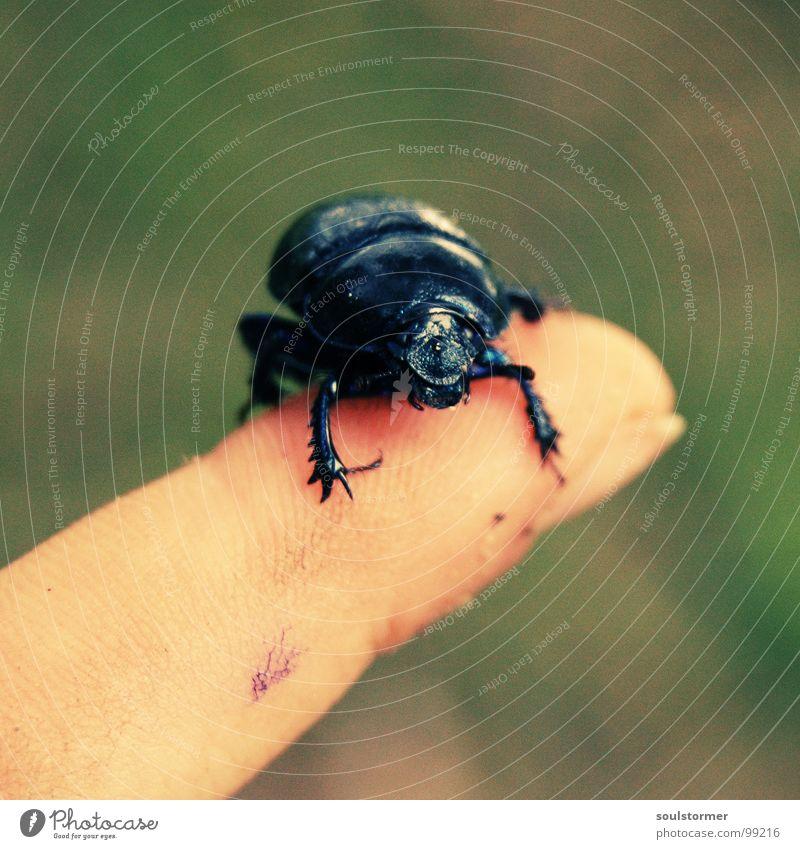 um den Finger gewickelt... Beine Fuß Arme laufen Flügel fallen festhalten Insekt Flucht Käfer krabbeln Panik kleben gepanzert Cross Processing