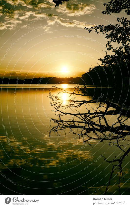 Abend Natur Wasser Himmel Sonne Sonnenaufgang Sonnenuntergang Baum Seeufer nass natürlich Wärme Warmherzigkeit Verliebtheit schön Einsamkeit Erschöpfung
