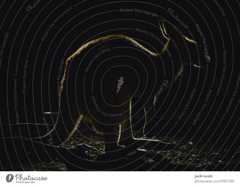 kangaroouette Ferne dunkel schwarz außergewöhnlich Zufriedenheit leuchten Erde frei einfach Pause Postkarte rein Gelassenheit Wachsamkeit exotisch Inspiration