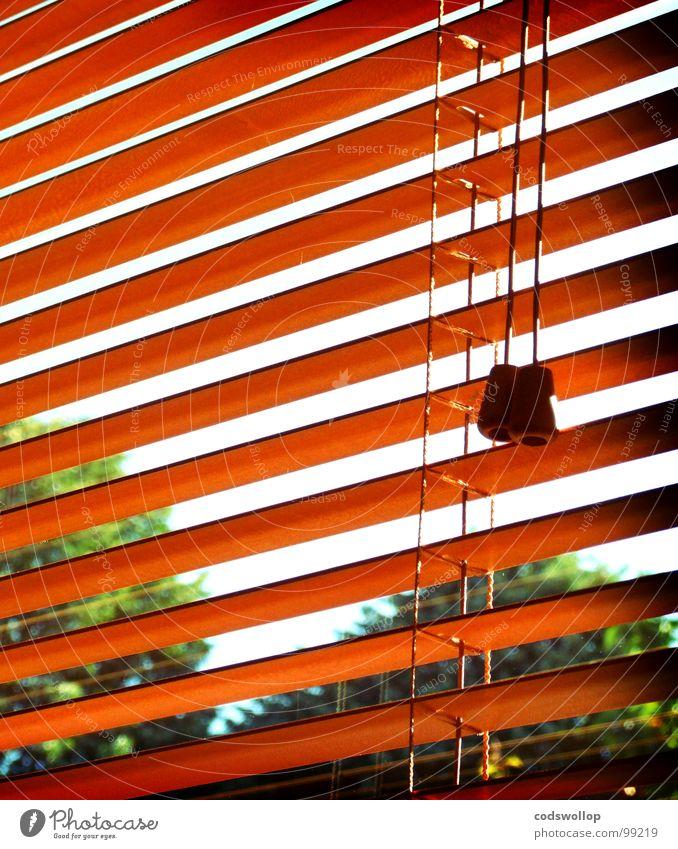 venezianische blinder Fenster Fensterladen Jalousie Baum Himmel notleidend Wohnzimmer Detailaufnahme Sommer window view Blick venetian blinds cord tree sky lost