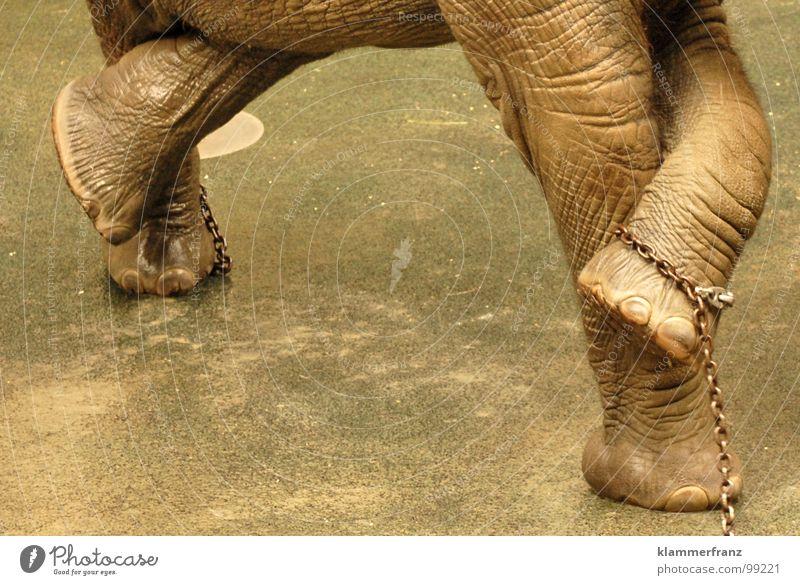 Verdammt, BESETZT! Elefant müssen dringend Tiergarten grau Wäsche angekettet Reinigen zurückhalten urinieren Schloss Schönbrunn Wien Zoo notleidend Stuhlgang