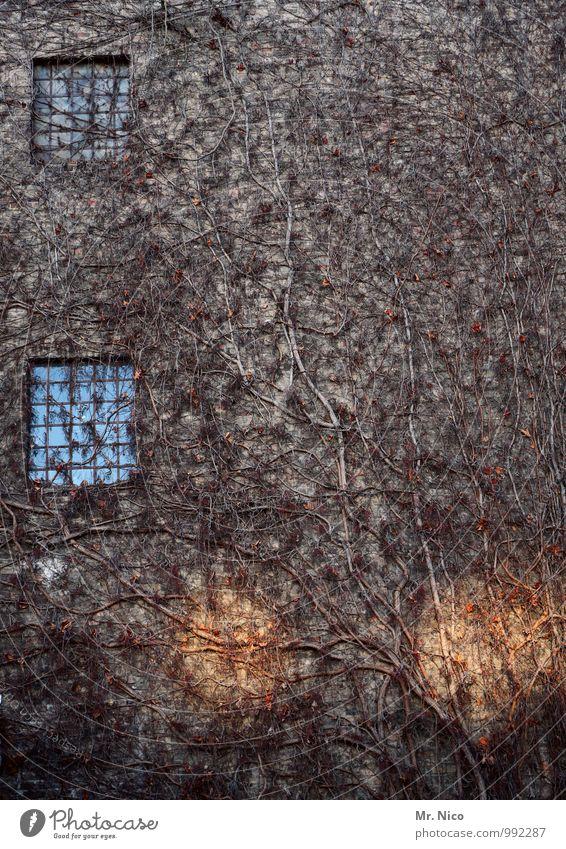 UT Köln | wucherei Umwelt Herbst Winter Pflanze Sträucher Efeu Blatt Haus Gebäude Architektur Mauer Wand Fassade Fenster trist Jahreszeiten Wachstum Geäst