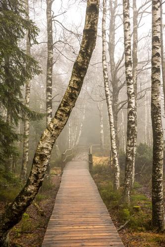 Birken im Nebel Lifestyle Freude sportlich Fitness Erholung Meditation Freizeit & Hobby Abenteuer Ferne Freiheit Berge u. Gebirge wandern Umwelt Natur