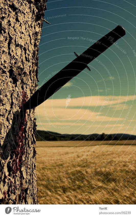 baumsterben Baum Feld Wiese Baumrinde fließen Blut Horizont braun Wolken verletzen zerstören töten Umweltschutz Waldsterben Baumsterben Tod Messer Himmel