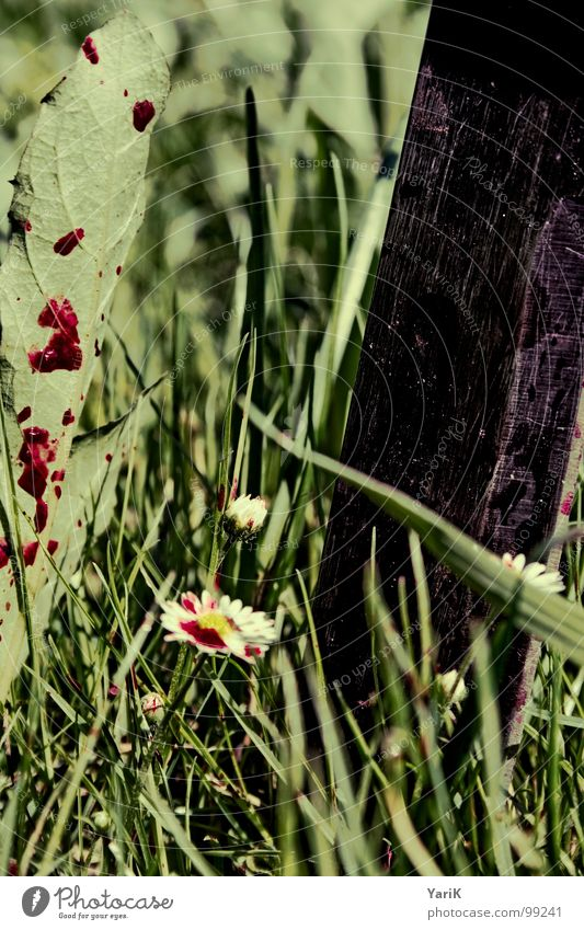 tote wiese grün Blume dunkel Wiese Gras Regen Wassertropfen Vergänglichkeit Rasen Halm Blut spritzen grauenvoll Blutfleck