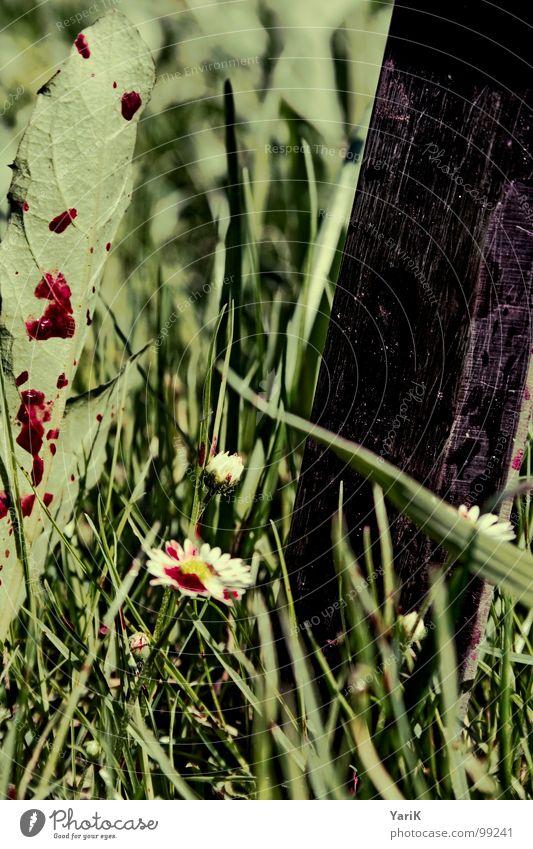 tote wiese Wiese Gras grün Blume spritzen Halm dunkel Regen grauenvoll Vergänglichkeit Rasen Blut Wassertropfen grashalbe Kontrast finser Blutfleck