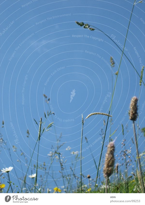 blau 04 Himmel Blume Blüte Gras Berge u. Gebirge Sand wandern Erde Pause Alpen Alm Klee Bergwiese Heilpflanzen Hahnenfuß