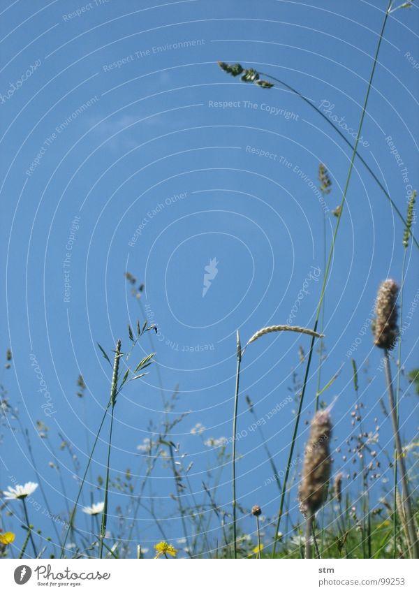 blau 04 wandern Pause Blume Gras Bergwiese Alpenwiese Blüte mehrfarbig Hahnenfuß Klee Erde Sand Himmel Berge u. Gebirge Alm margeritte Heilpflanzen