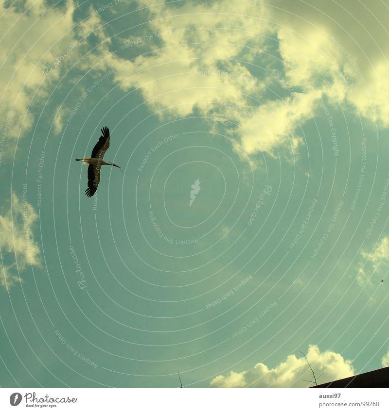 Grundsteinlegung Storch Vogel Nestbau schwanger Hausbau Elternschaft Himmel Baustelle bauen