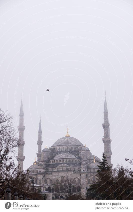 Blaue Moschee, Istanbul, Türkei Stadt Sehenswürdigkeit Ferien & Urlaub & Reisen Ferne Städtereise Herbst Winter schlechtes Wetter Nebel Stadtzentrum Bauwerk
