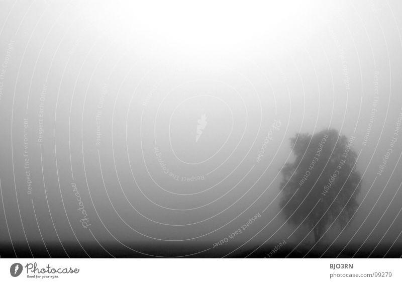 einfach weitermachen Himmel weiß Baum schwarz Einsamkeit Nebel Horizont Trauer trist weich Ast Verzweiflung sanft trüb Schleier Morgennebel
