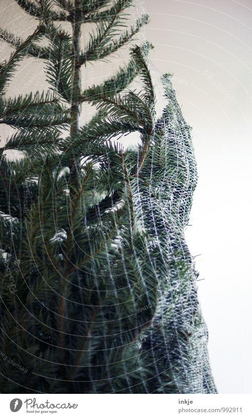 bitte 1x schmücken! Lifestyle Freizeit & Hobby Dekoration & Verzierung Feste & Feiern Weihnachten & Advent Nadelbaum Tanne Weihnachtsbaum Netz grün Vorfreude