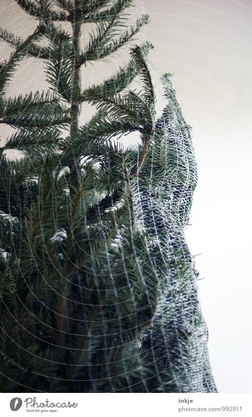 bitte 1x schmücken! Weihnachten & Advent grün Feste & Feiern Lifestyle Freizeit & Hobby Dekoration & Verzierung Netz Weihnachtsbaum Tradition Tanne Vorfreude verpackt Weihnachtsdekoration Nadelbaum