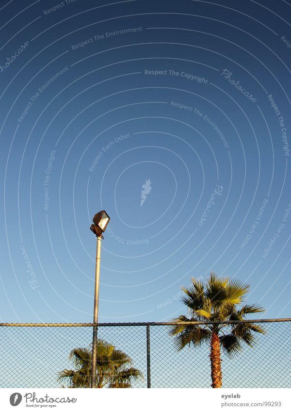 Paradiesbegrenzung Palme Zaun Schönes Wetter Lampe Laterne Straßenbeleuchtung Sommer Ferien & Urlaub & Reisen Süden grün Flutlicht Überwachung Tennis Hotel
