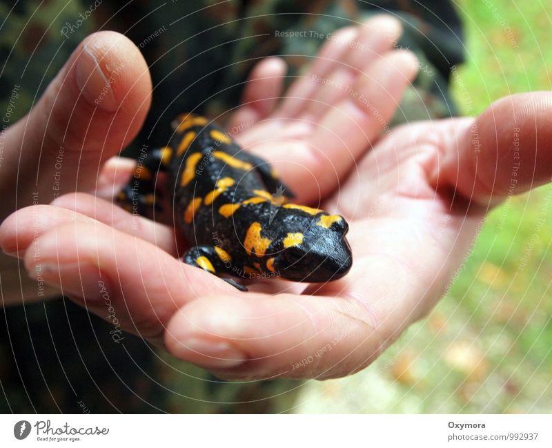 Feuer in den Händen Natur ruhig Tier schwarz gelb außergewöhnlich Idylle Wildtier beobachten berühren Abenteuer Hilfsbereitschaft festhalten Vertrauen entdecken