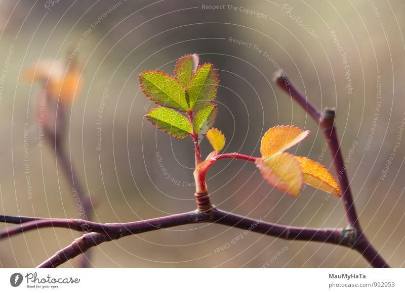 Natur Pflanze grün Baum Blatt Wald Umwelt braun erleuchten horizontal karg Wildrosen