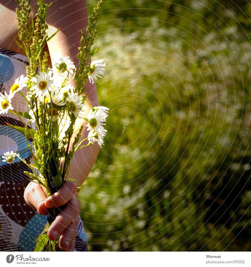 blumenkind Frau Hand schön Sommer Blume Wiese Freiheit Gras Garten Glück Wärme Frühling Finger Romantik festhalten Kitsch