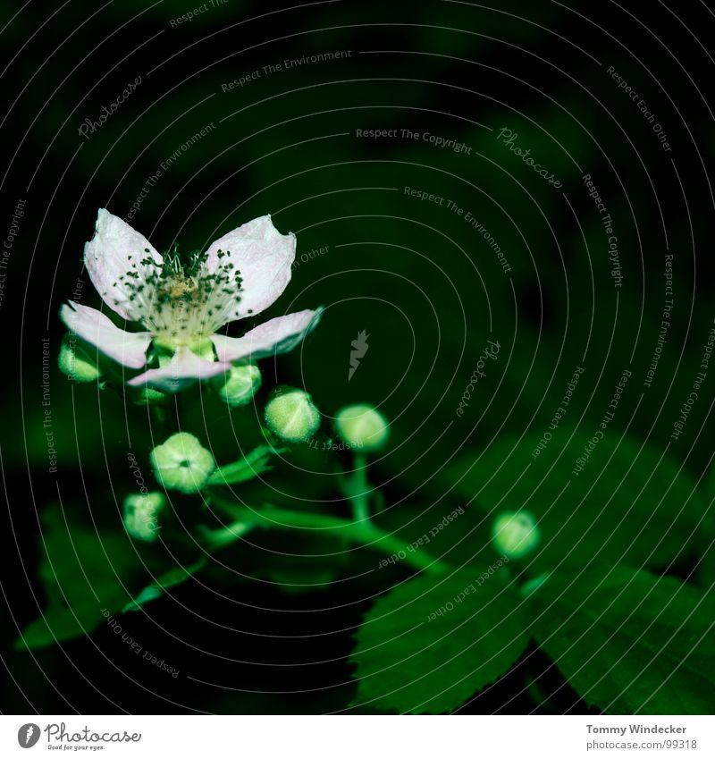 Licht und Schatten II Pflanze Blattgrün Stengel fruchtig saftig vitaminreich Sommer Frühling giftgrün Grünpflanze Garten Wachstum Jahreszeiten weich nass Physik