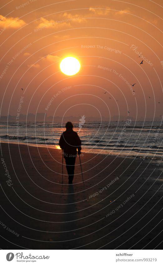 Belgisches Stöckeln Gesundheit Freizeit & Hobby Sport Fitness Sport-Training 1 Mensch Sonnenaufgang Sonnenuntergang Schönes Wetter Wellen Strand Bucht Meer