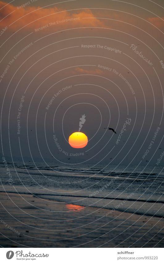 Belgische Himmelsscheibe Himmel Natur Ferien & Urlaub & Reisen Wasser Sonne Meer Landschaft Wolken Tier Ferne Strand dunkel Traurigkeit Küste fliegen Vogel