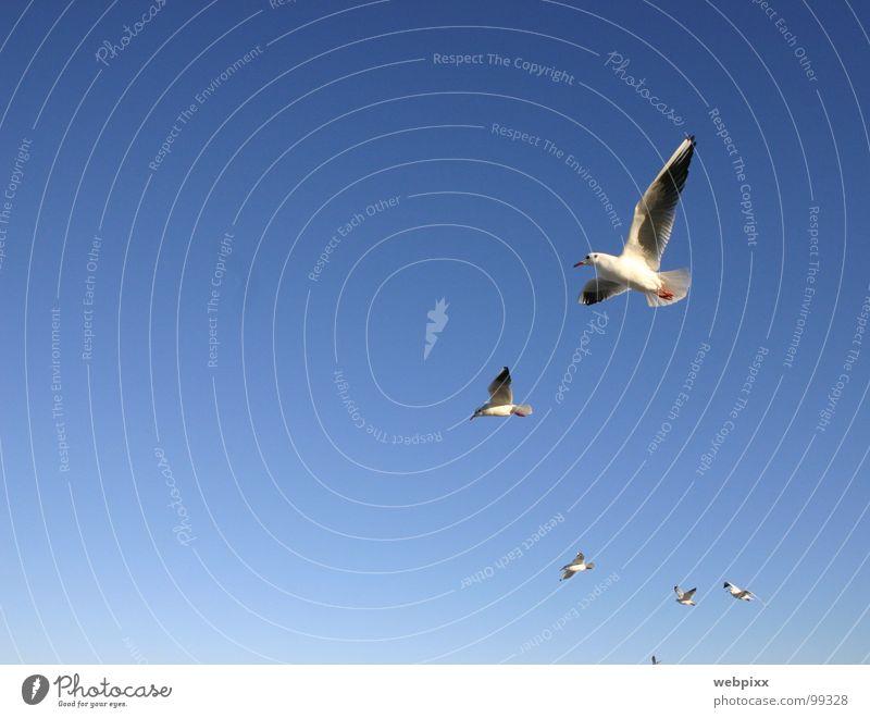 Möwenclub Natur Himmel weiß blau Ferien & Urlaub & Reisen Ferne Erholung Vogel gehen Wind fliegen hoch Luftverkehr Feder Flügel einzigartig
