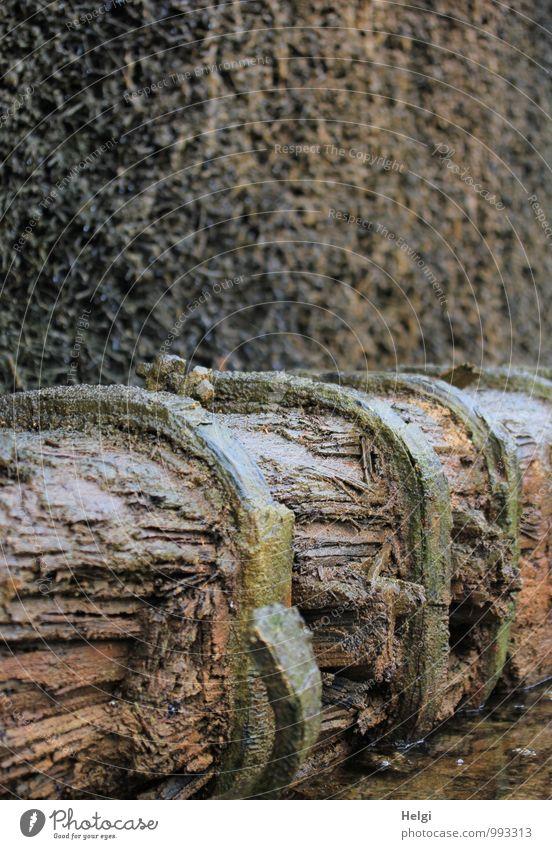 Feuchtigkeit | Gradierwerk Gesundheit ruhig Kur Baumstamm Schwarzdorn Park atmen Erholung liegen außergewöhnlich dunkel frisch kalt nass braun bizarr