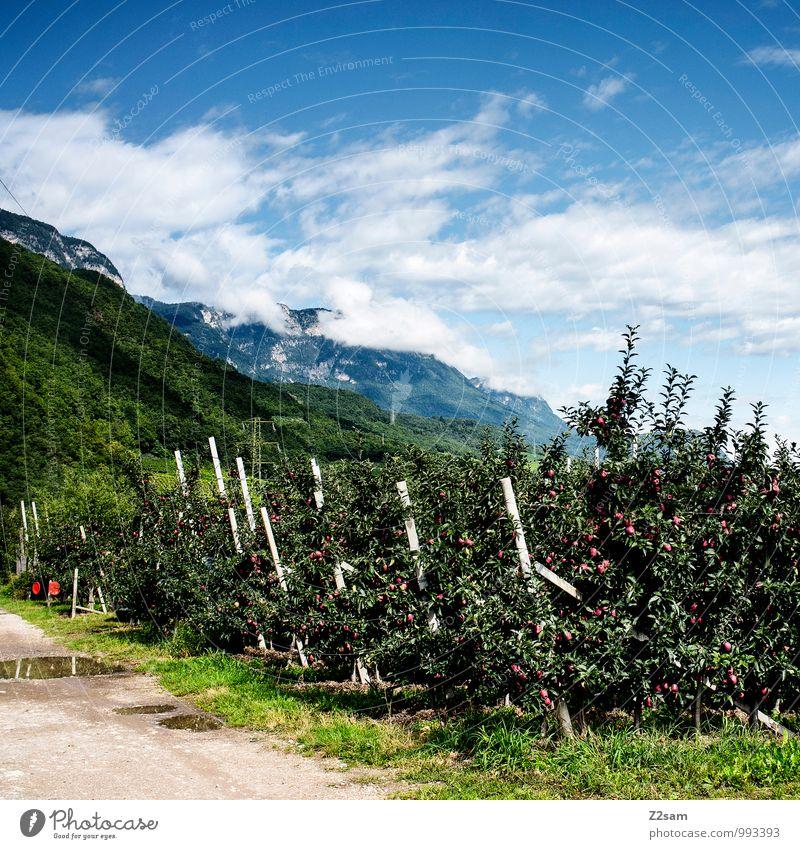 Südtiroler Äpfel Himmel Natur Ferien & Urlaub & Reisen Sommer Baum Erholung Landschaft Wolken Berge u. Gebirge natürlich Gesundheit Idylle Sträucher ästhetisch