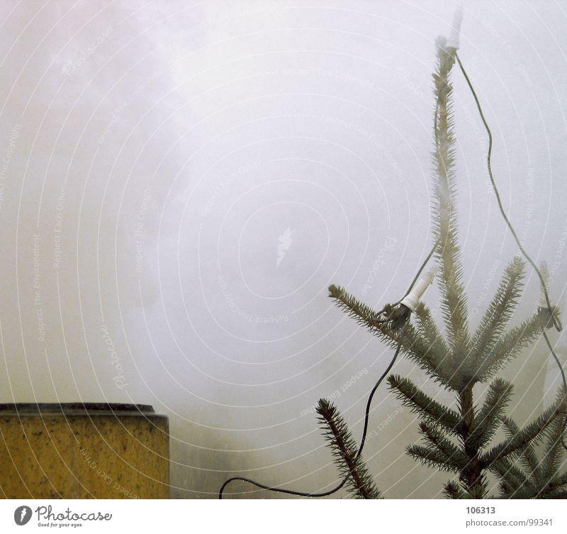 REAKTORUNGLÜCK Natur Pflanze Weihnachten & Advent Baum Tier Ferne Umwelt Stein Lampe Nebel dreckig Erde gefährlich Klima bedrohlich Industrie