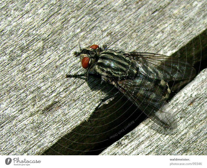 Spalt und Fliege I dunkel Insekt Ekel Furche krabbeln Spalte Fleischfliege