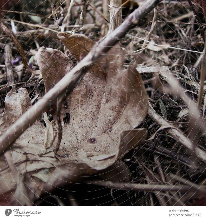 früher Herbst Blatt Wiese Gras Vergänglichkeit trocken vergessen getrocknet