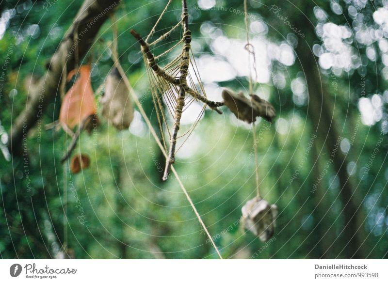 Voodoo Dekoration & Verzierung Holz Abenteuer Angst träumen böse Esprit Spiritualität geistig Baum Hexe 35 Millimeter Film Farbfoto Nahaufnahme Detailaufnahme