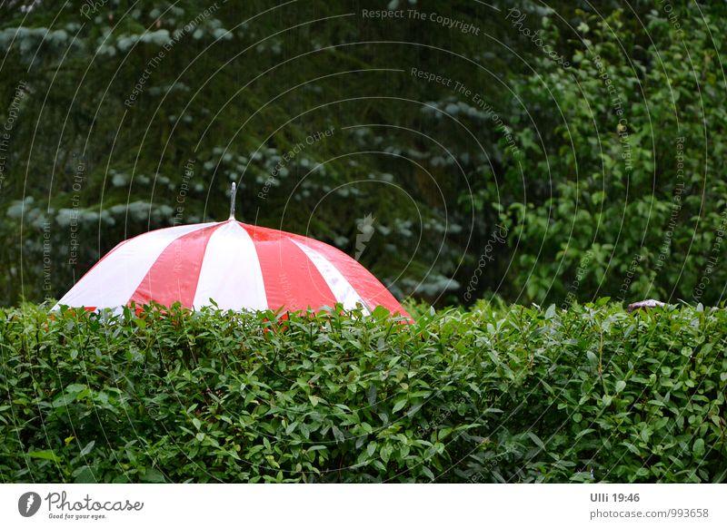 Schietwetter...................(Nr. 75) Sommer Garten 1 Mensch Natur Wassertropfen schlechtes Wetter Regen Hecke Stadtrand Menschenleer Gartenzaun Fußgänger