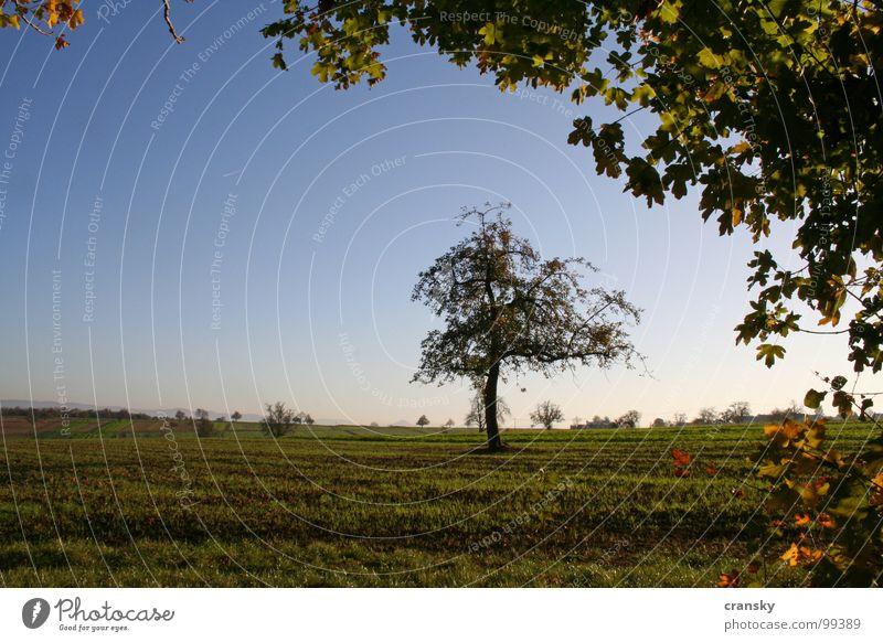 Herbst is all around us Himmel Natur Pflanze Baum Blatt ruhig Landschaft Umwelt Wiese Tod Gefühle Traurigkeit Gesundheit träumen Stimmung