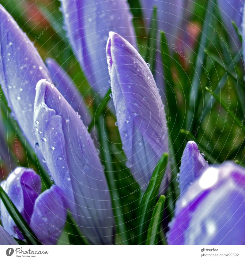 spring break blau grün Sommer Wasser Blüte Frühling Regen Wetter Wassertropfen geschlossen Seil violett Blütenknospen Kugel Osterei schlechtes Wetter