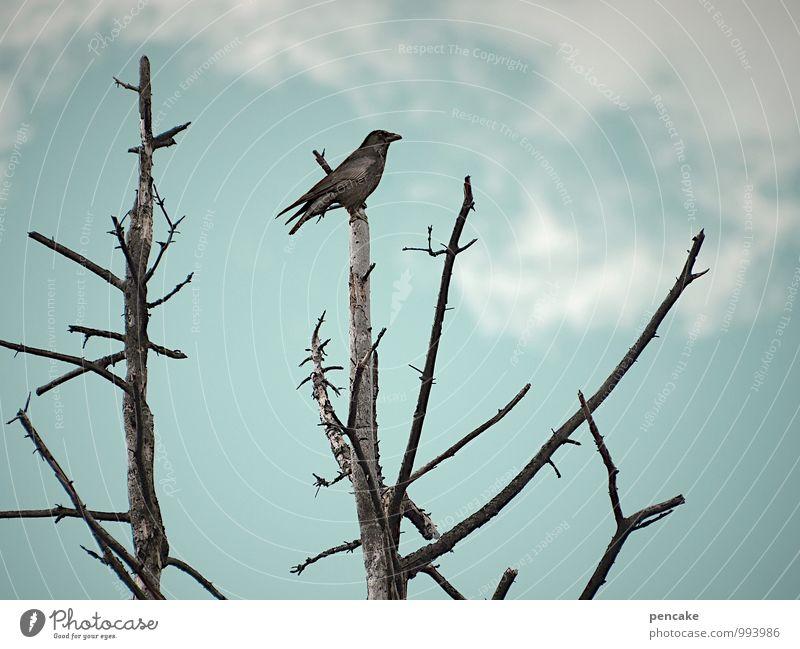 orakel Natur Urelemente Himmel Wolken Winter Eis Frost Baum Moor Sumpf Vogel 1 Tier Zeichen Gefühle Macht Wachsamkeit Weisheit träumen Tod Appetit & Hunger