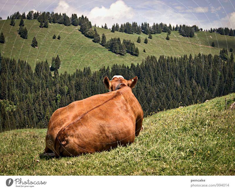 hüttengaudi | ich hab rücken Himmel Natur Sommer Landschaft Wolken Tier Wald Wärme Wiese feminin liegen genießen Schönes Wetter Zeichen Alpen Müdigkeit
