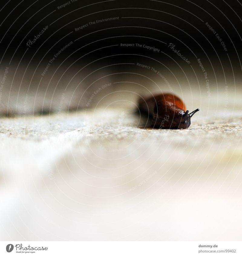slimer Auge Garten Stein braun dreckig laufen wandern Bodenbelag feucht Tiefenschärfe Ekel Glätte Schnecke krabbeln Fühler Schleim
