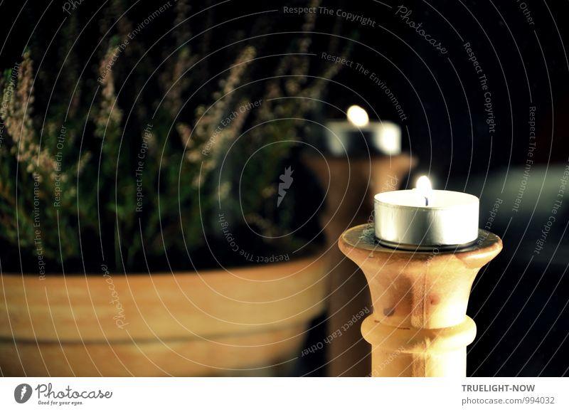 Teelicht und Terracotta Pflanze Weihnachten & Advent grün Erholung ruhig schwarz Lifestyle Wohnung orange Zufriedenheit Häusliches Leben Dekoration & Verzierung