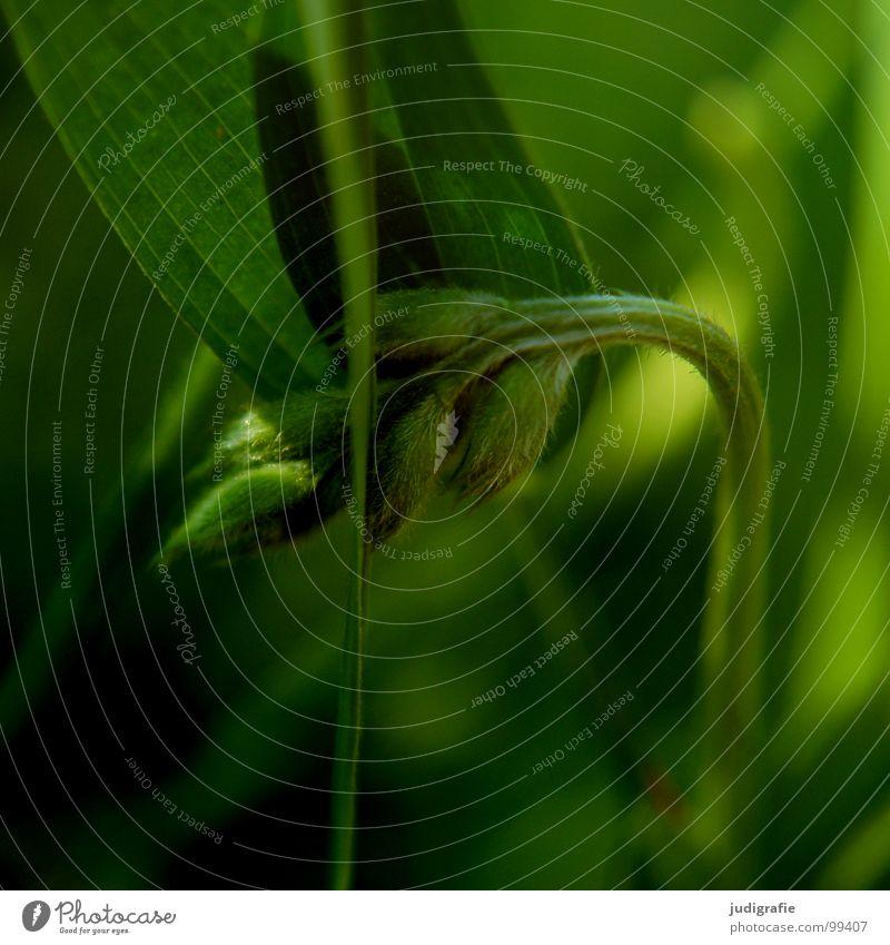 Gras Natur schön grün Pflanze rot Sommer schwarz Farbe Wiese Gras braun Umwelt Wachstum einfach Kräuter & Gewürze Stengel
