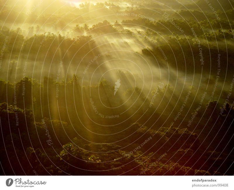 sunthing gonna change... Natur grün Ferien & Urlaub & Reisen ruhig Farbe Wald Beleuchtung Nebel Frieden Asien Palme sanft Sonnenaufgang harmonisch friedlich angenehm
