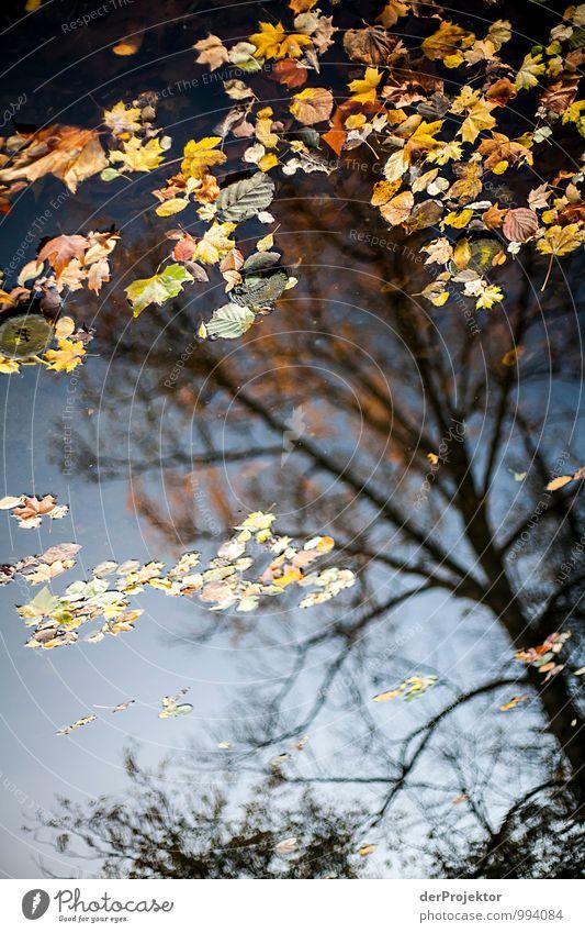 Irgendwie hängt das Laub noch und ist doch gefallen...*400* Natur Ferien & Urlaub & Reisen Pflanze Baum Landschaft Blatt Freude Umwelt Traurigkeit Gefühle