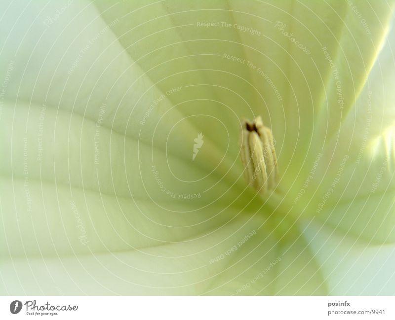 WHITE*FLOWER Blume flower